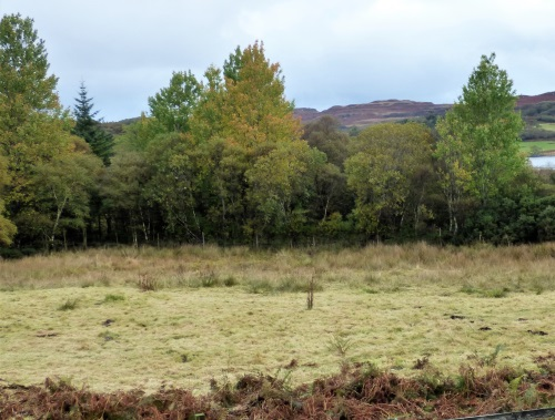 Autumn colours at Ardrioch
