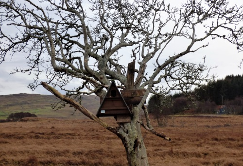Barn owl box at west ardhu