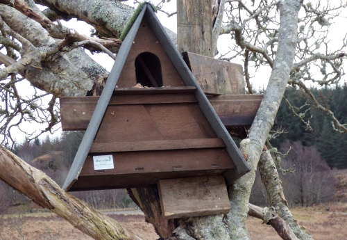 Barn owl box in situe