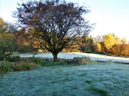 Frosty morning at Ardrioch