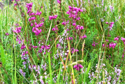 Ling Bell Heather aug19