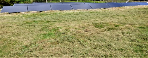 Our solar panels with strimmed grass