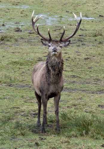 Red Deer Ardura