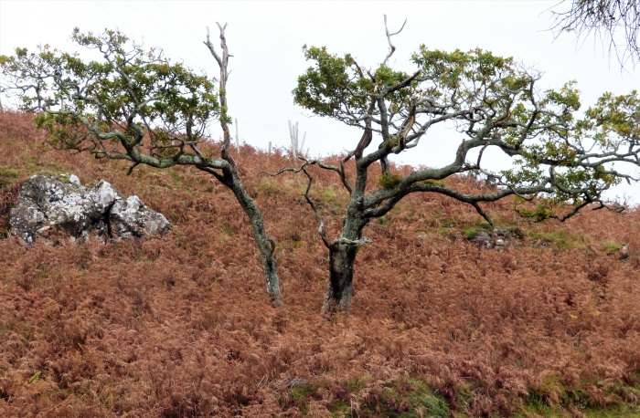 Trees with bracken and rock
