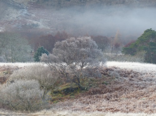 Winter tree scene Dervaig